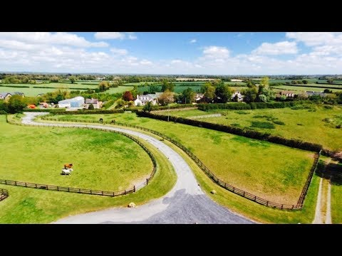HORSES IN FIELD |DRONE VIDEO|