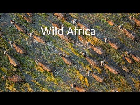 Best Drone Video of African Wildlife