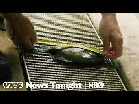 We Hired An Underwater Drone To Inspect Chicago's Trump Tower (HBO)