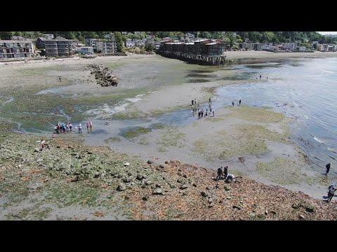 Drone video shows low tide in West Seattle