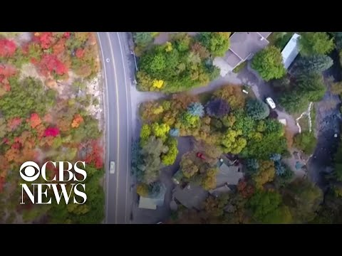 Drone video captures stunning autumn leaves