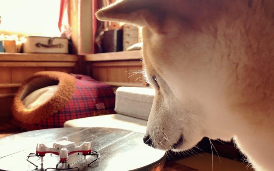 ドローンが飛ばなくて I don't know how to fly a drone