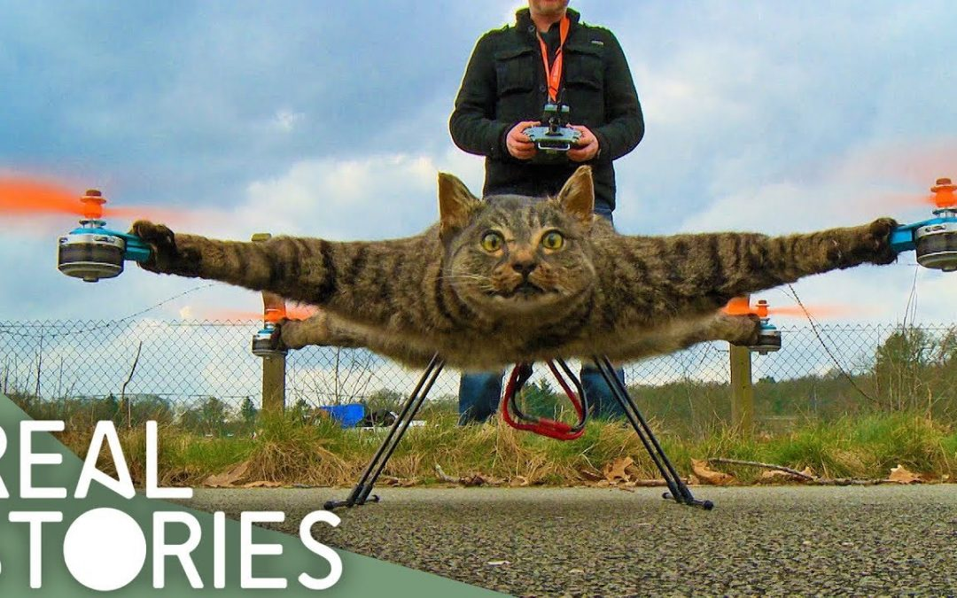 Would You Turn Your Cat Into A Drone? | Real Stories