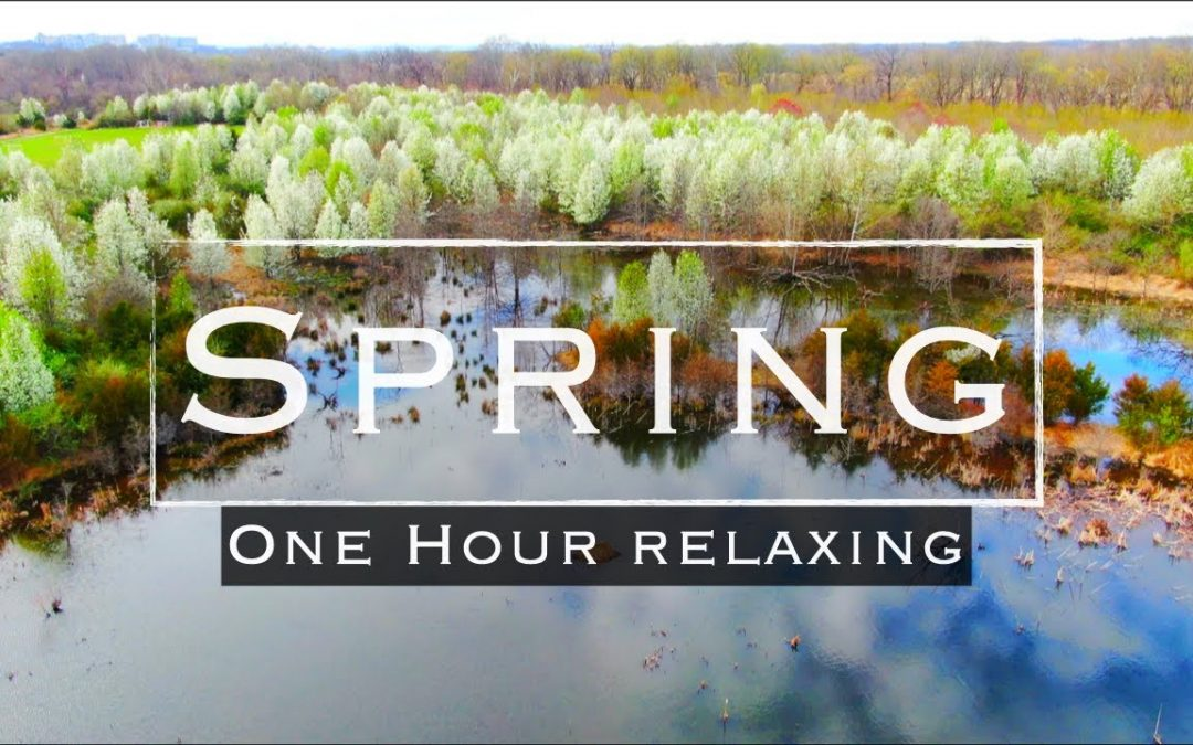 Relaxing Spring 🌳1 Hour 🕊 Aerial Drone Footage